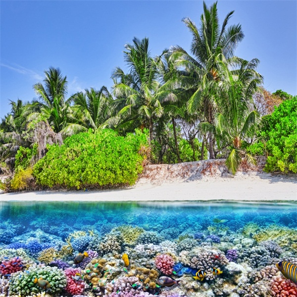 Beach Palm Tree Underwater Coral Reef Photography