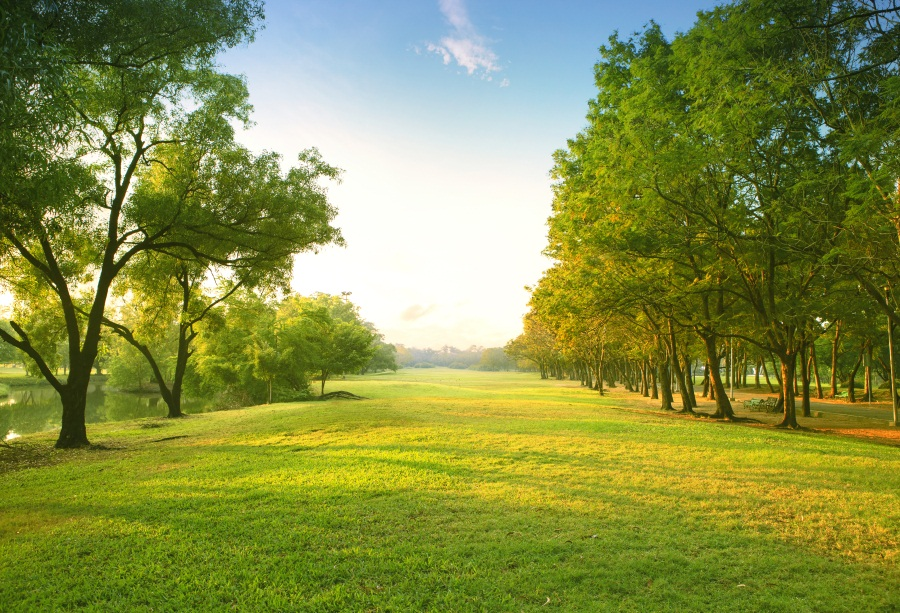 5x3ft Green Nature Background Studio Photography Photo ...