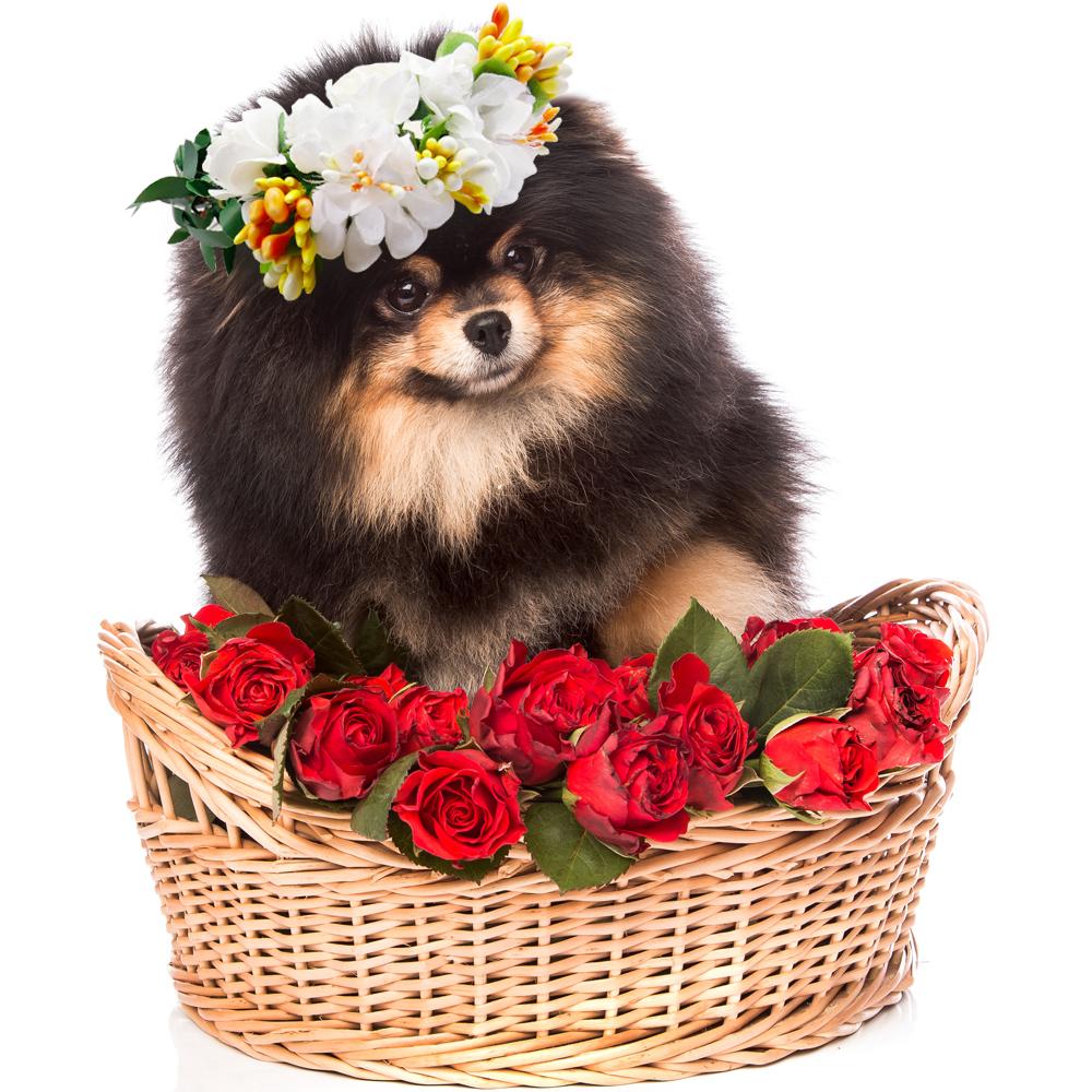 Cat Dog Pink Rose Flower  hairband headband Crown hat wedding Collar Leash Dog flower collar Pet bows