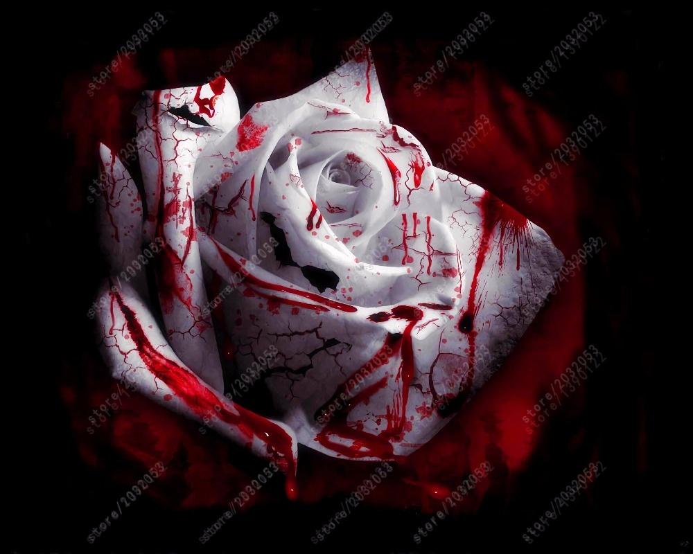 Rare Rose Seeds Black Rose Flower With Red Flower Border Seeds Ebay