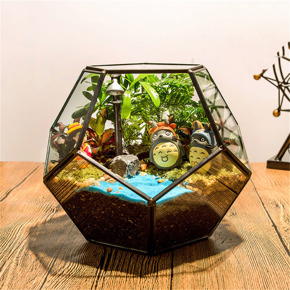 Decorative Glass Terrarium Plant Display Succulent Set Filler Home