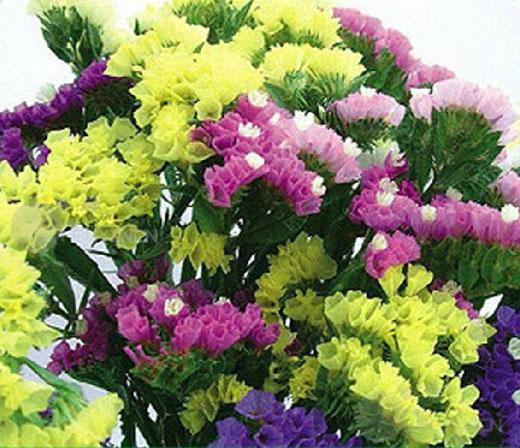 Flower seed purple blue yellow sea lavender limonium statice marsh flower seed purple blue yellow sea lavender limonium mightylinksfo