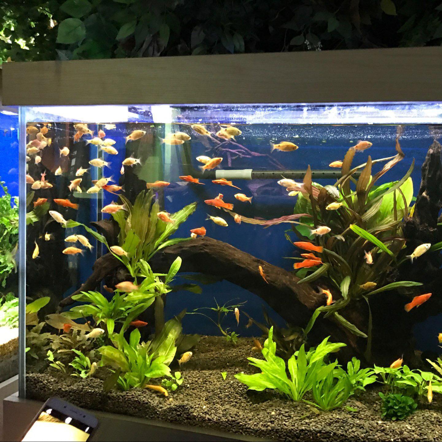aquarium beleuchtung 90 cm