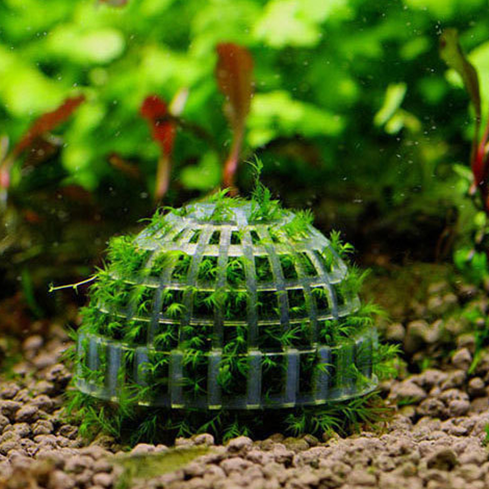 Marimo moss ball filter live aquarium aquatic plants decor for Pond plant filter